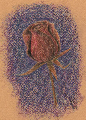 rose color pencils drawing
