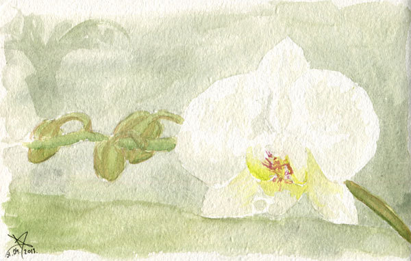 Orchid watercolor sketch