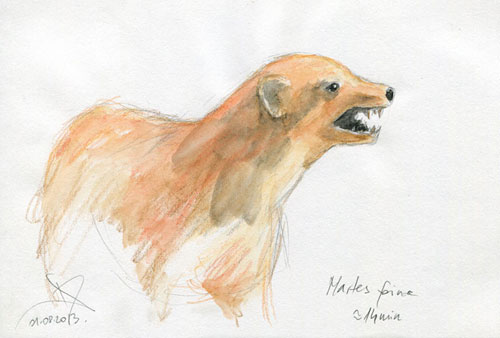 Beech marten watercolor pencil sketch