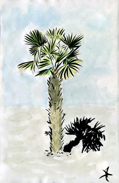 Palm tree ink and watercolor sketch