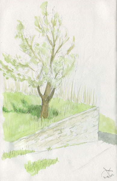 Apple tree watercolor sketch