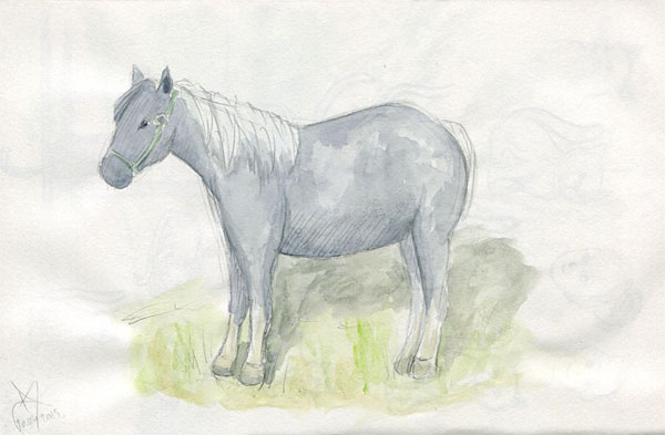 Horse watercolor sketch
