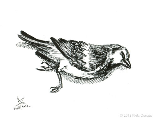 Dead bird ink sketch