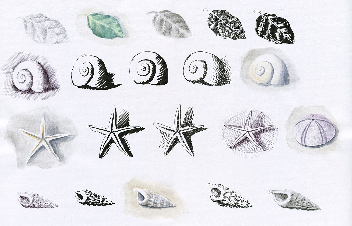 Hermit Crab Shell Drawing Hermit Crab Shell And Sea